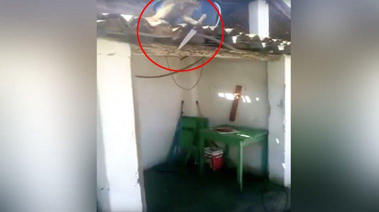 'I think you've had enough': Knife-wielding drunk monkey terrorizes Brazilian bar (VIDEO) — RT News