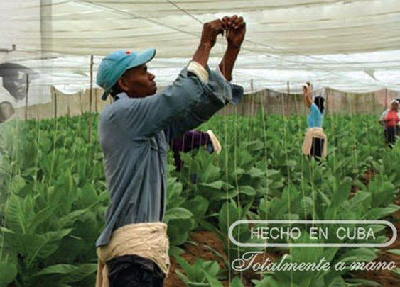Introduction to Habanos (Havana Cigars) | Montecristo Social Club