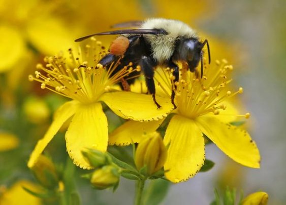 UN science report warns of fewer bees, other pollinators - Yahoo News