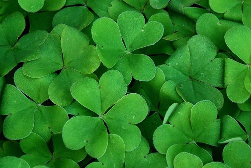 Why Do We Celebrate St. Patrick's Day? | Bevvy