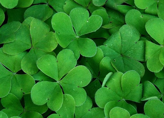 Why Do We Celebrate St. Patrick's Day?   Bevvy