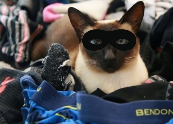 Pant-stealing cat burglar Brigit's New Zealand crime spree - BBC News