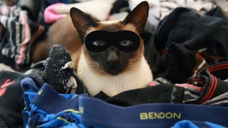 Pant-stealing cat burglar Brigit's New Zealand crime spree - BBC News
