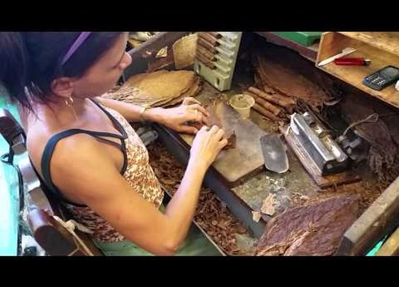 Habanos Cigar Festival 2015 - La Corona Factory Tour - YouTube