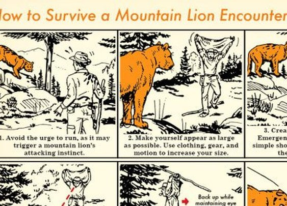 How To Survive A Mountain Lion Encounter | The Art Of Manliness