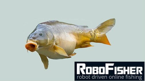 Carps may live up to fifty years and more!
