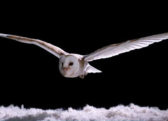 How Does An Owl Fly So Silently? - Super Powered Owls - BBC - YouTube