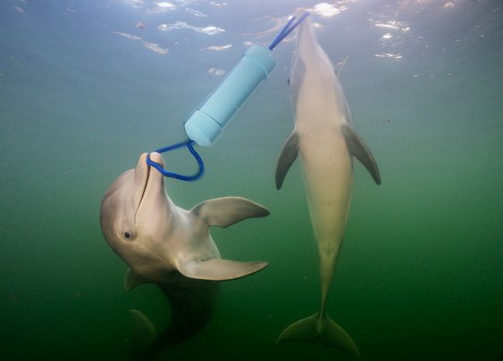 Dolphins have a language that helps them solve problems together | New Scientist