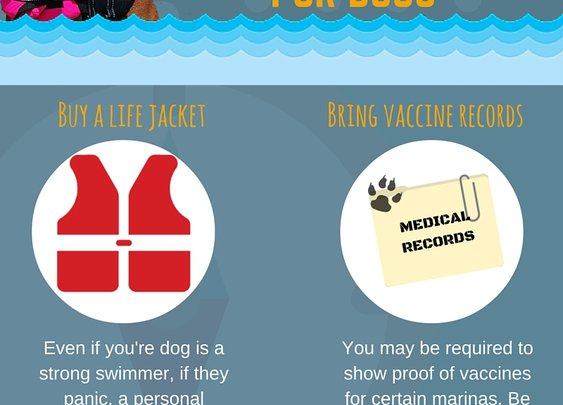 Safety Tips for Boating with Your Dog This Summer - JetDock