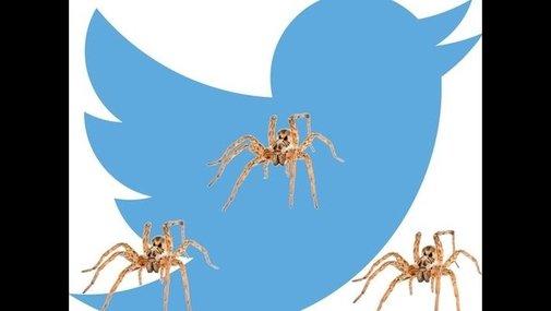 Man live-tweets spider-infested rental car nightmare   9news.com