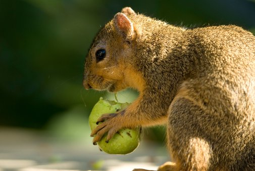 Time to Savor the Squirrel (Again)?