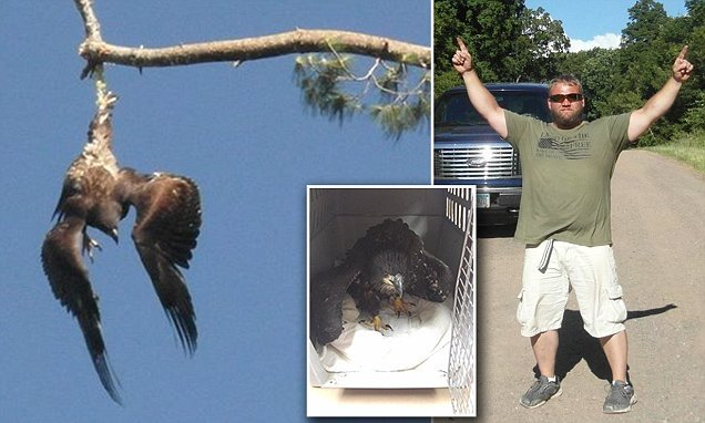 US Army veteran rescues bald eagle dangling upside down from a rope in a tree | Daily Mail Online