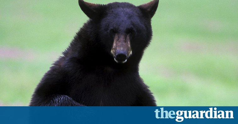 Man punches a bear in Ontario and walks away with only scratches | World news | The Guardian