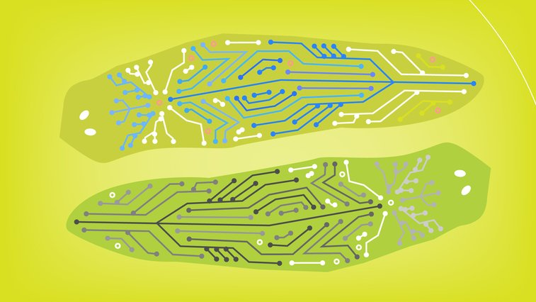 Biologists have recreated life inside a computer — NOVA Next | PBS