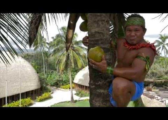 How To Climb a Coconut Tree Like a Champ