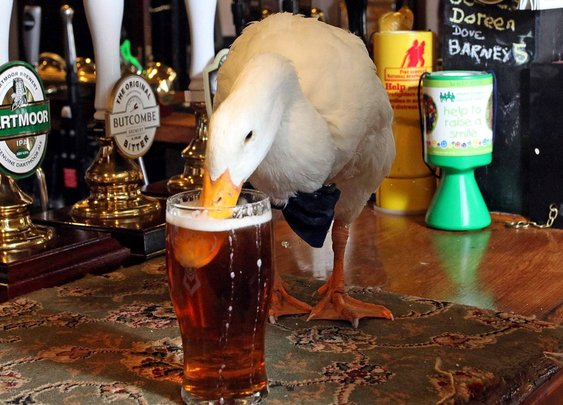Duck Wearing Bow-Tie Walks Into Pub, Drinks Pint, Fights Dog, Loses