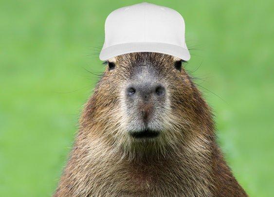 Capybaras Overrun the Rio Olympic Golf Course | Mental Floss