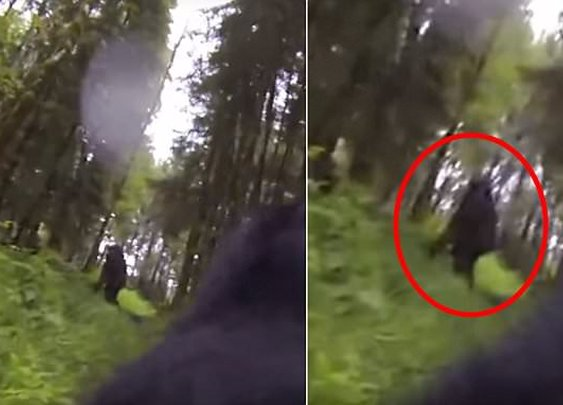 Dog With a GoPro Captures Footage of Bigfoot