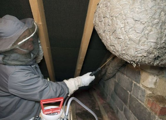 'Colossal' wasp nest found in Corby attic