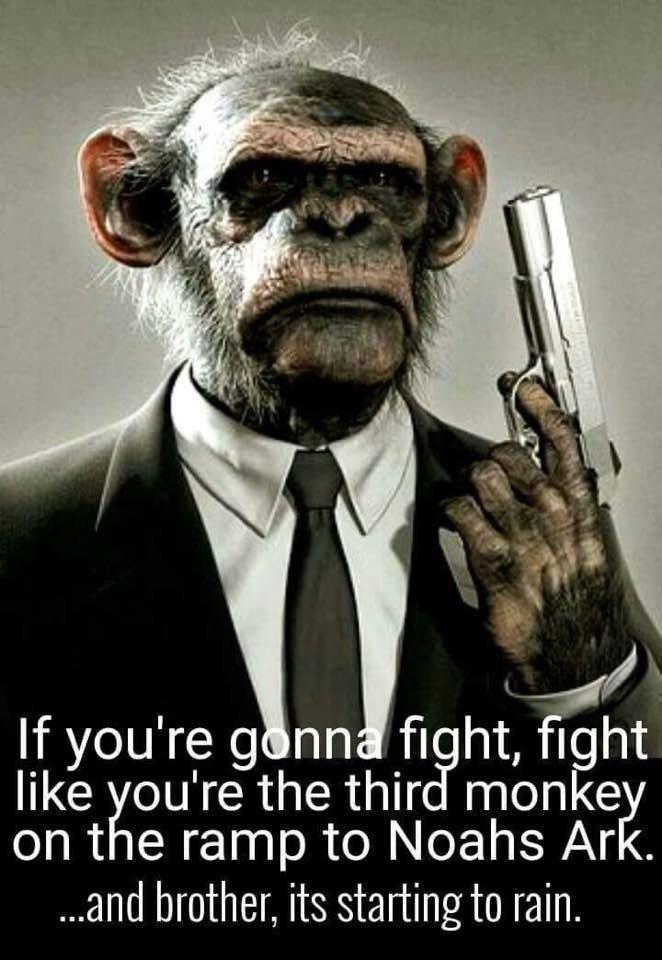 Monkey Fight