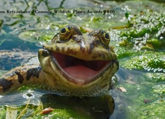 2016 Finalists —Comedy Wildlife Photography Awards
