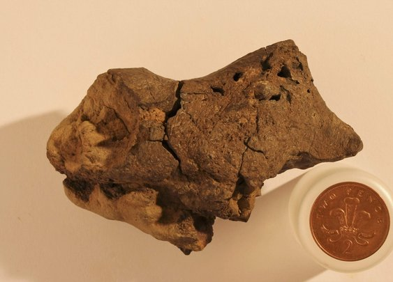 The world's first fossilized dinosaur brain may have been found