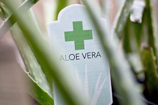 No Evidence of Aloe Vera Found in the Aloe Vera