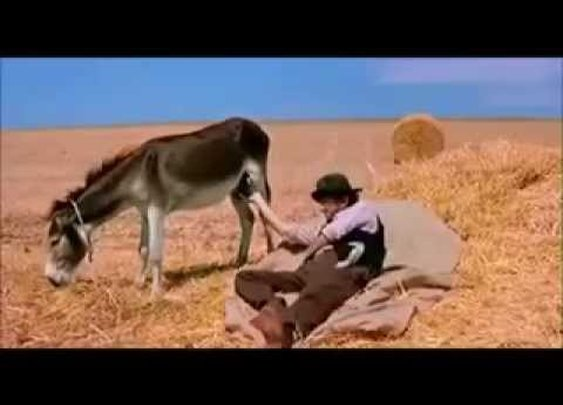 Hillarious!!! Man telling time by touching Donkey's balls!!! - YouTube