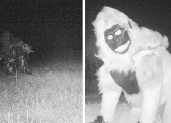 Police Set Up A Camera To Find A Mountain Lion, But Got Something Better