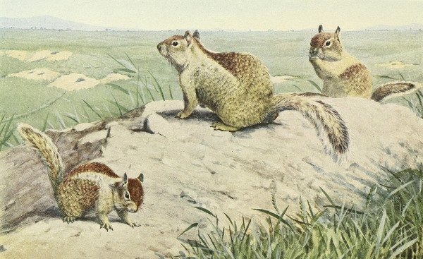 In 1918, California Drafted Children Into a War On Squirrels | Atlas Obscura