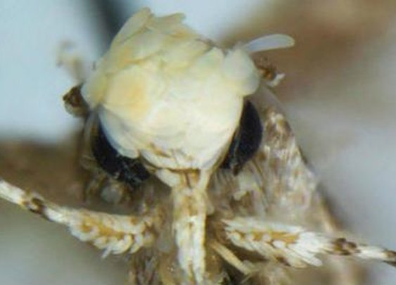 Scientists name new moth species after 45th US President