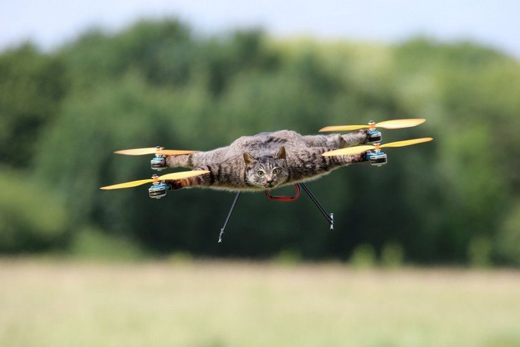 Taxidermy Drones | Gentlemint Reserve