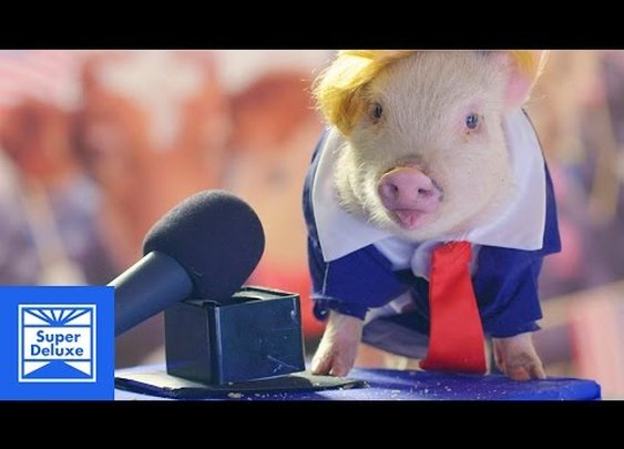 Donald Trump's Inauguration Recreated with Baby Animals