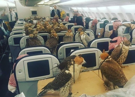 Hawks on a Plane, Saudi Prince Buys Tickets for His 80 Feathered Friends