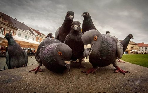 Animals That Look Like They're About To Drop The Hottest Albums Ever