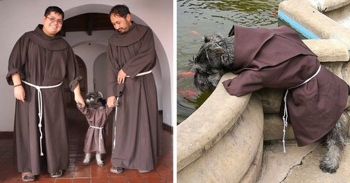 This Monastery Adopted A Stray Dog, Now He Enjoys His Life As A Monk | Bored Panda