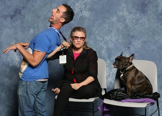 """Guy spends his tax return on glamour shots with the original """"Star Wars"""" cast (7 Photos) : theCHIVE"""