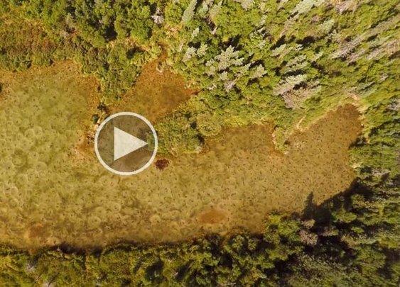Drone Captures Alaskan Sockeye Salmon Run from Above