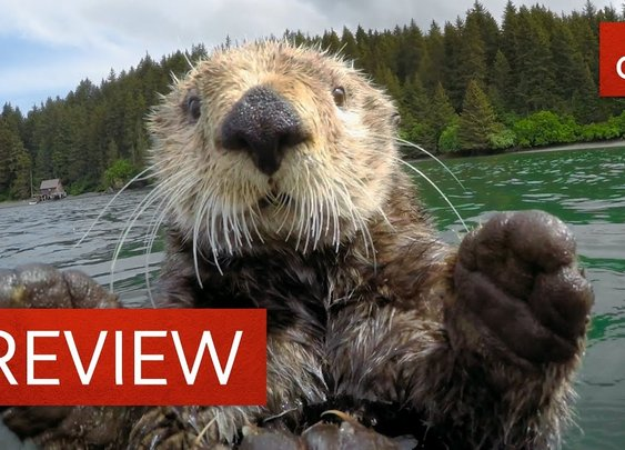 "Cute otters intimately filmed by ""spy sea otter"""