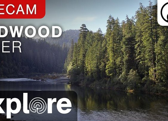 Redwood River Live Cam