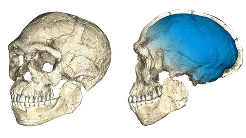 Earliest fossil evidence of Homo sapiens found in Morocco, rewriting the story of our species - LA Times