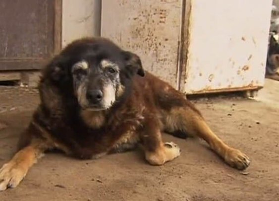 World's Oldest Dog, Maggie, Takes her Last Nap - Doggies Care