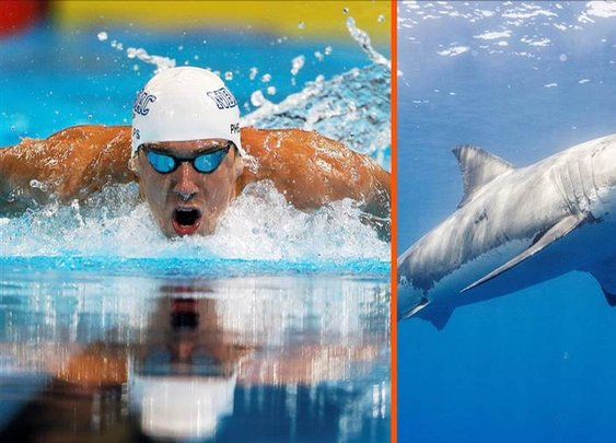 Michael Phelps will race a great white during Shark Week