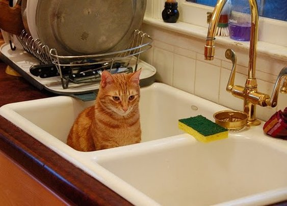 Cute Cats In Sinks