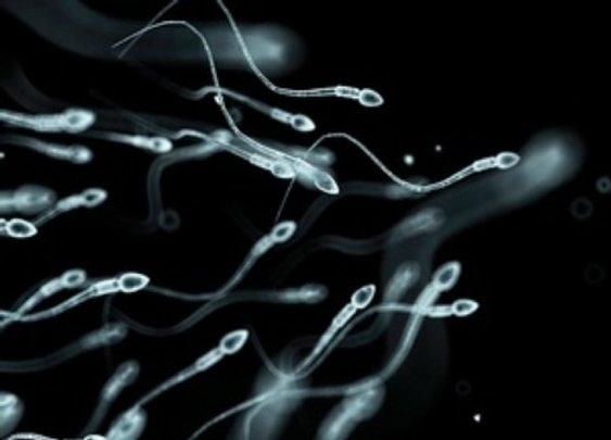 Sperm Count Dropping in Western World