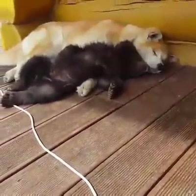 Best Buds - Yes, that's a bear.  You gotta watch the video!