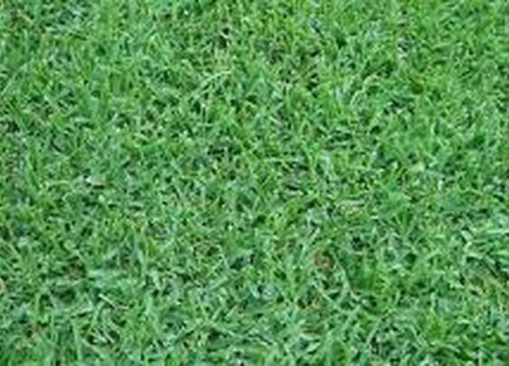 M3 Artificial Grass & Turf Installation Miami – Get Artificial Grass Here!: mad_potpourri