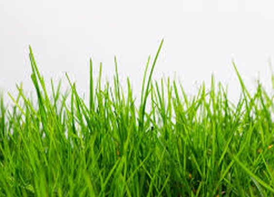 Get Artificial Grass For Homes, Now! – Turf Grass Miami
