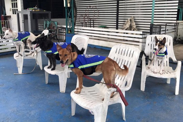 'Smart vest' turns stray dogs into Thailand's street guardians | Reuters