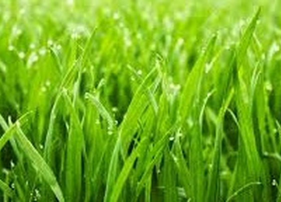 Advantages Of Synthetic Lawn West Palm Beach